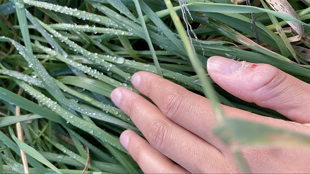 A still from Ella Frost's Ghosts. It shows a hand touching dewy blades of grass.