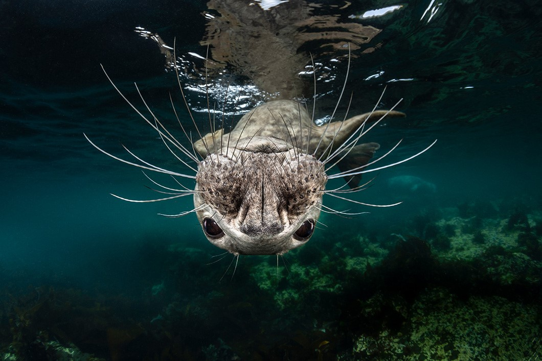 Greg Lecoeur, France, Shortlist, Open Competition Natural World Wildlife, 2019 Sony World Photography Exhibition