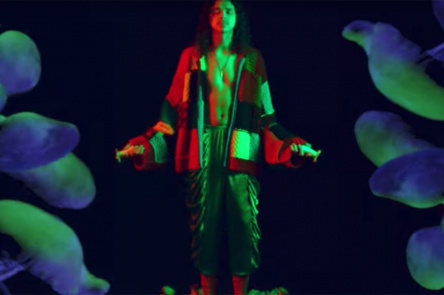 Mushrooms video still
