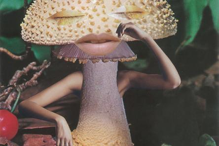 Mindful Mushroom - Seana Gavin