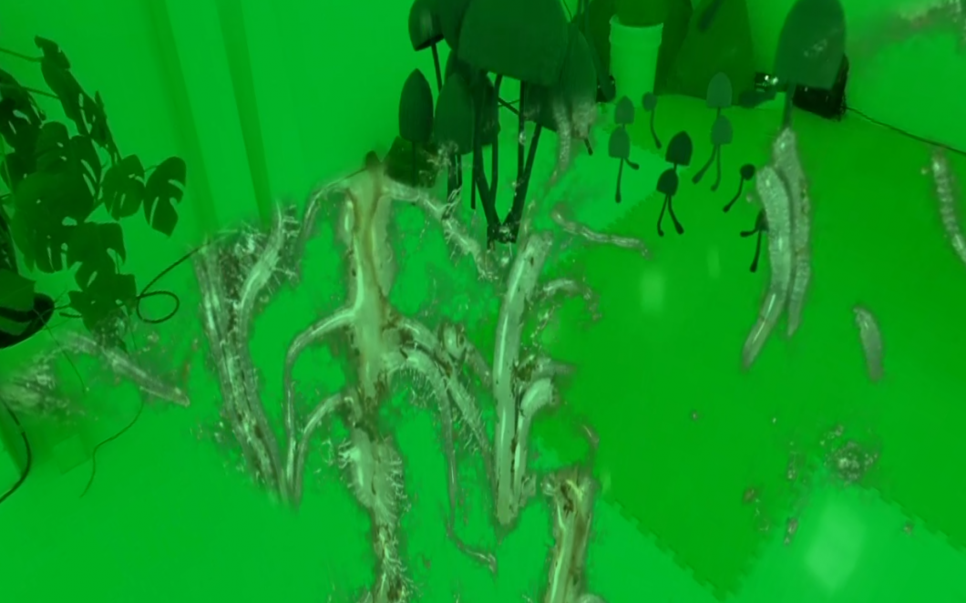 A still from Adham Framawy's film, showing a green room with a digital rendering of organisms growing.