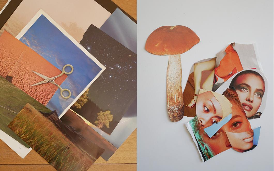 Pages and cut-outs of landscapes and mushrooms from old magazines
