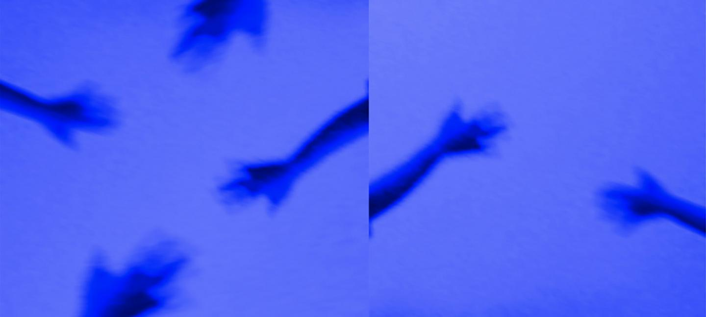 An artwork by Shenece Oretha. It shows blurred depictions of arms and hand reaching out. They are dark blue against a light blue background.