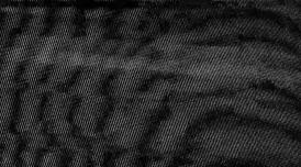 An image of TV static - grey flecks on black background.
