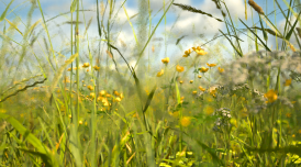 Artwork by Alan Warburton showing a CGI rendered image of a field with yellow flowers and blue sky