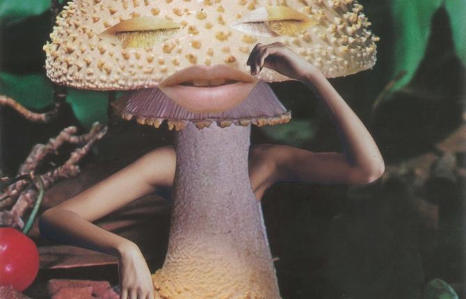 Artwork: Mindful Mushroom - Seana Gavin